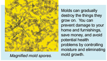 Magnified mold spores